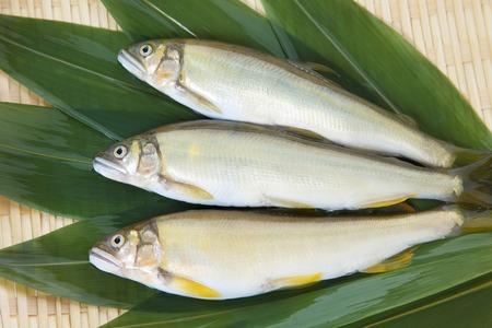 ayu: Ayu fish Stock Photo