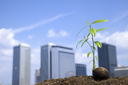 Sprout germinated and buildings
