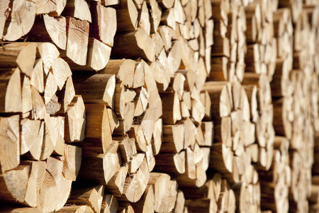 kindling: Stacked firewood