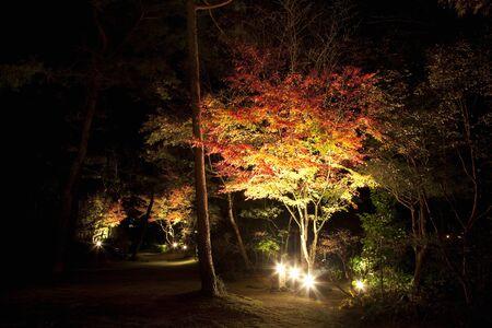 lightup: Light-up of autumn leaves