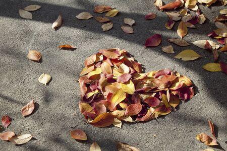 Fallen leaves of Heart