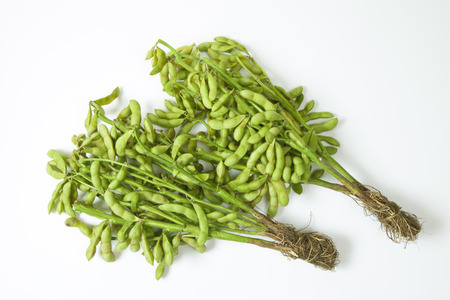 Branch with black edamame