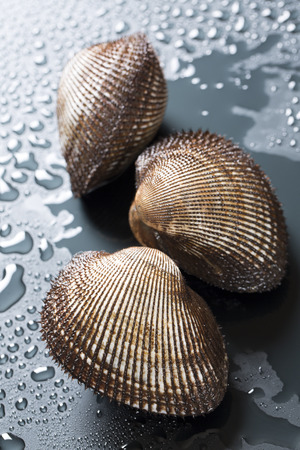 ark: Ark shell clam Stock Photo
