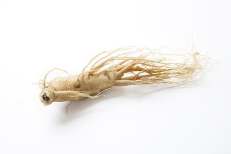 Korean ginseng Zdjęcie Seryjne