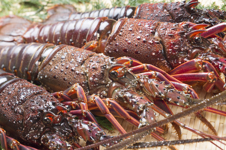 spiny lobster: Spiny lobster