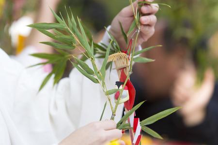 lucky bamboo: Lucky bamboo or Zari