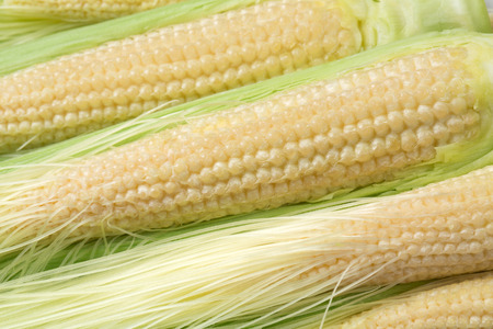 The harmonious with young corn Stock Photo