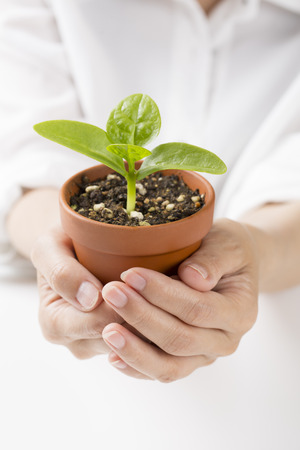 burgeoning: Potted sprout Holding