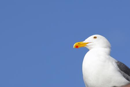 the seagulls: Seagulls in Marina del Rey