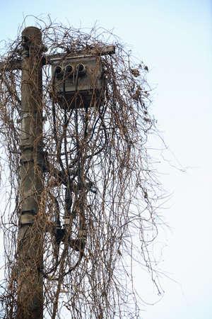 utility pole: Utility pole and ivy Stock Photo