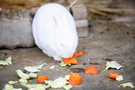 lagomorpha: Rabbits eat the bait