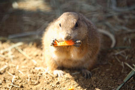 bait: Pureiridoggu to eat bait