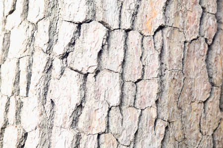 wood surface: The surface of the wood