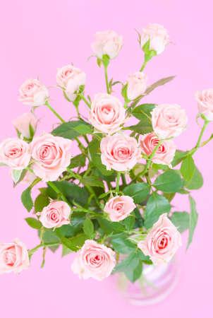 splinter: Rose flowers