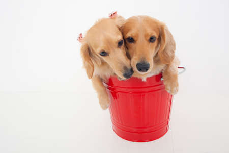 bowwow: Miniature contained in bucket