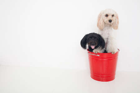 entered: Two dogs of hybrids entered the bucket Stock Photo