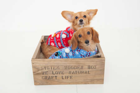 bowwow: Dogs went into the box Stock Photo