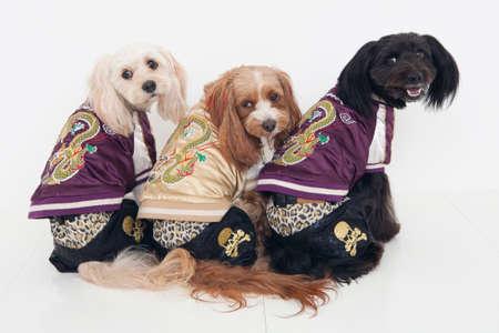 mammalian: 3 dogs wearing Sukajan