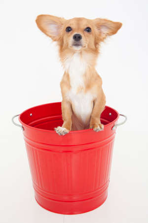 bowwow: Dogs that are in the bucket Stock Photo