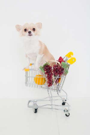 bowwow: Chihuahua riding a shopping cart