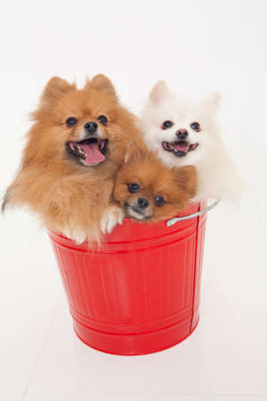 bowwow: 3 dogs went into the bucket Stock Photo