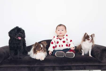 seres vivos: Bebé con los 3 perros