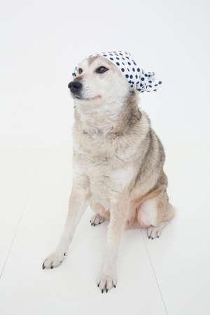 smartness: Hybrid dogs