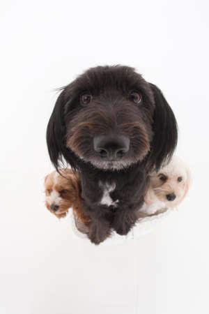 bowwow: 3 dogs