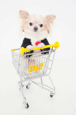 bowwow: Chihuahua, which went into the shopping cart