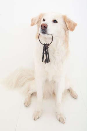 hybrid: Hybrid dogs