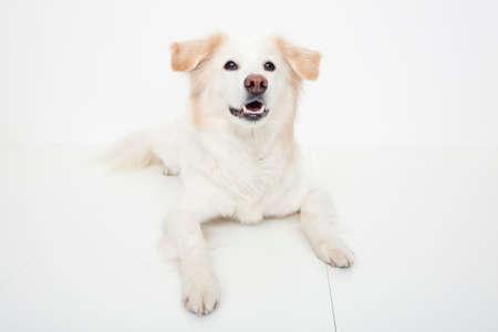 bowwow: Hybrid dogs