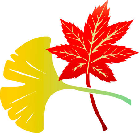ginkgo: Ginkgo and maple