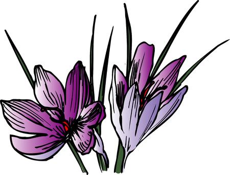 condiment: Saffron