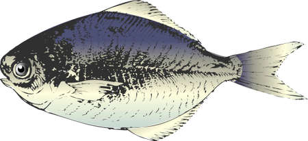 saltwater: Butter fish
