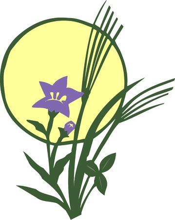 bellflower: Harvest bellflower and the Mid-Autumn Stock Photo