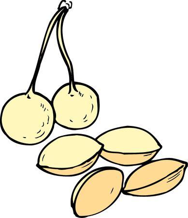 husk: Gingko nuts