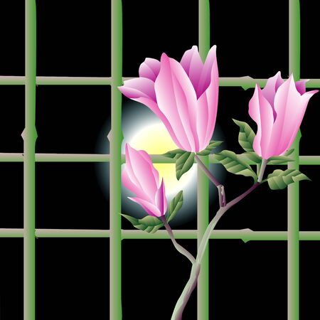 magnolia: Magnolia