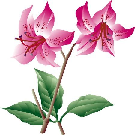 azalea: Mitsuba azalea