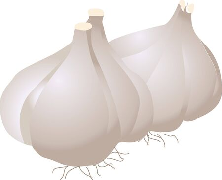 provisions: Garlic