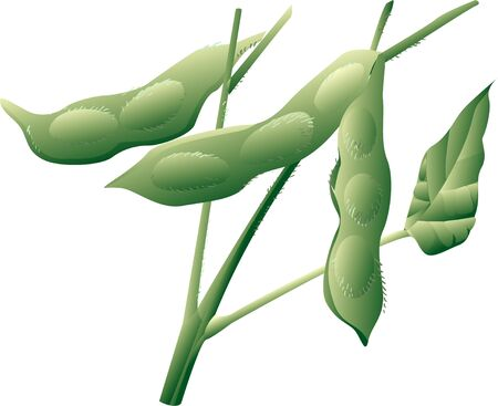 provisions: Green soybeans Stock Photo