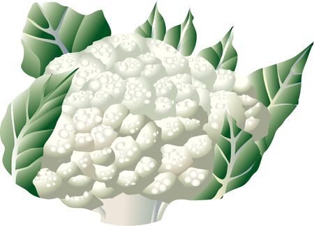 provisions: Cauliflower Stock Photo