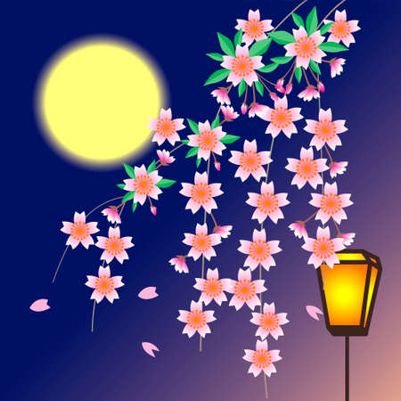 drooping: Paper lantern and cherry blossoms Stock Photo