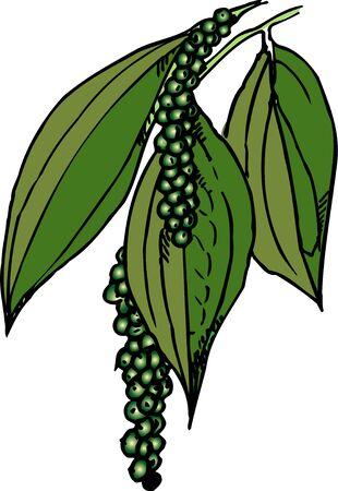 peppercorn: Peppercorn