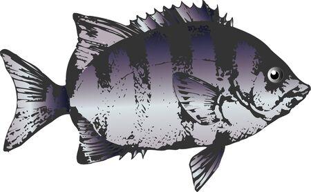 bass: Parrot bass