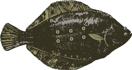 saltwater: Spotted halibut
