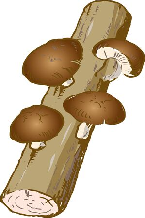 cultivation: Shiitake mushroom cultivation
