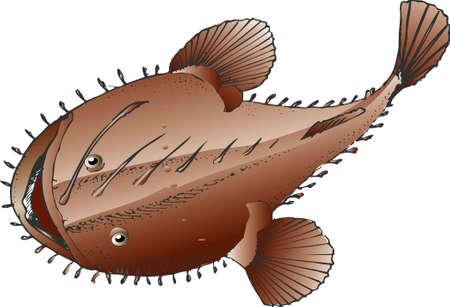 angler: Angler Stock Photo