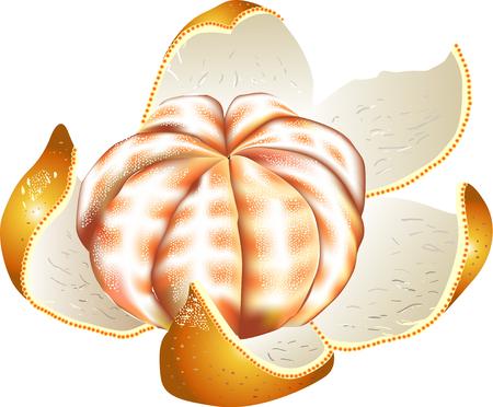 provisions: Mandarin oranges