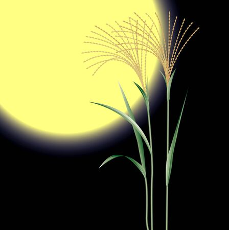 harvest moon: Mid-Autumn harvest moon and silver grass