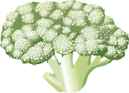 provisions: Broccoli